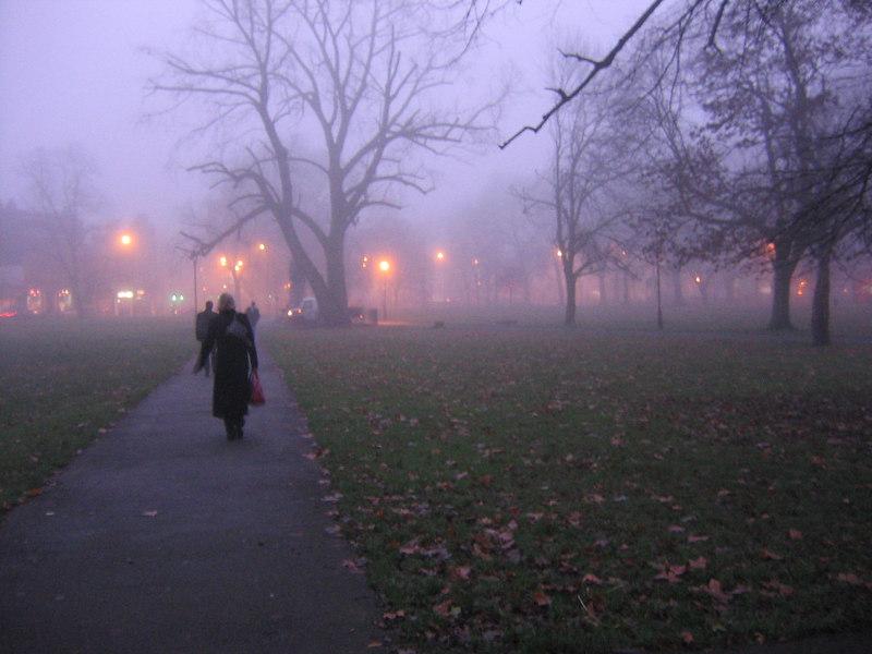 Winter fog - Clapham Common