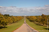 Windsor Great Park - The Long Walk