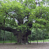 The Major Oak, Sherwood Forest, Nottingham, England