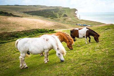 Shetland Ponies at Beachy Head