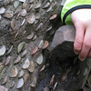 The Money Tree <FONT SIZE=1>© Chiyoko Meacham</FONT>