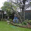 Pruning Mum & Dads Apple Tree.  <FONT SIZE=1>© Chiyoko Meacham</FONT>