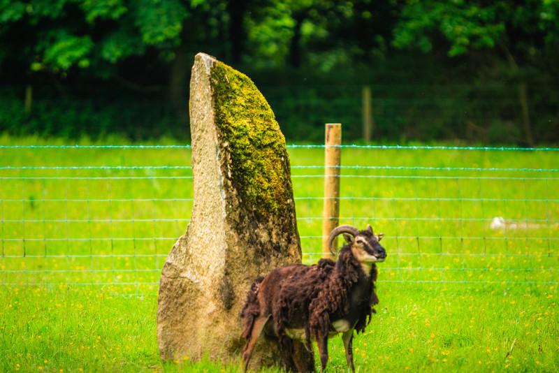 Near Cardigan, Pembrokeshire, Wales