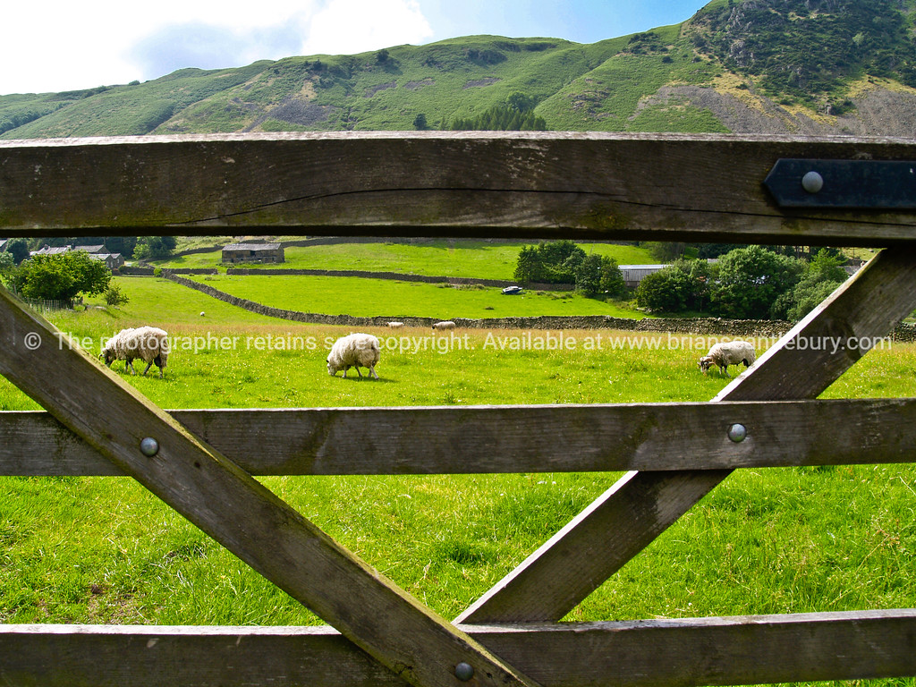 "English countryside, through the farm gate, A view of the UK SEE ALSO:   <a href=""http://www.blurb.com/b/893070-impressions-of-the-uk"">http://www.blurb.com/b/893070-impressions-of-the-uk</a>"