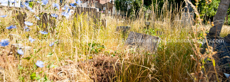 uk,england,cornwall (8 of 1370)