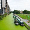 Narrowboats moored along algae covered Regents Canal, London with park on one side of canal and high apartment buildings on other.
