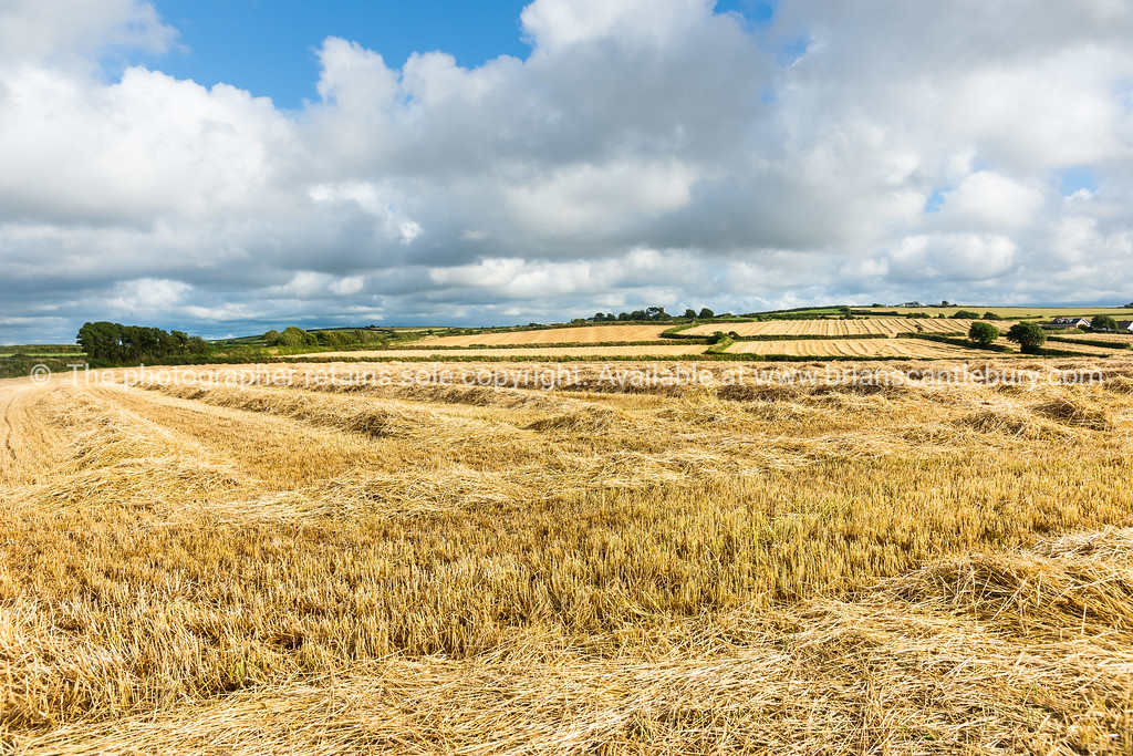 Cornwall countryside at harvest time, cut hay fields stretch to horizon and cloudy sky