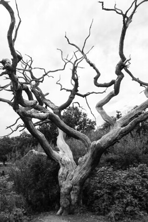 Epping Forest walks and trees