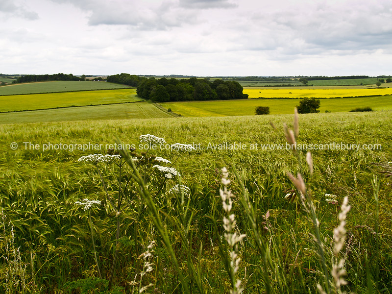 """A view of the UK, cropping fields. SEE ALSO:   <a href=""""http://www.blurb.com/b/893070-impressions-of-the-uk"""">http://www.blurb.com/b/893070-impressions-of-the-uk</a>"""