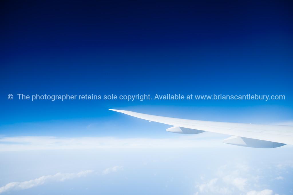 White wing-2