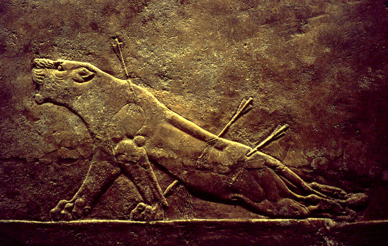 Dying lioness. Assyrian wall relief, from the collection of the British Museum, London.