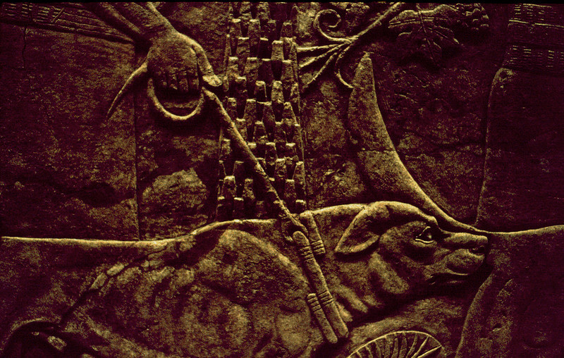 Assyrian wall relief depicting a leashed hunting dog. From the collection of the British Museum, London.