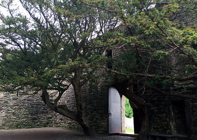 Trees in the courtyard at Craigmillar Castle