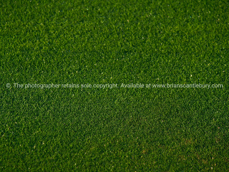 """Green grass of golf fairway, close-up. SEE ALSO:   <a href=""""http://www.blurb.com/b/893070-impressions-of-the-uk"""">http://www.blurb.com/b/893070-impressions-of-the-uk</a>"""