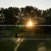 Sun bursts through plane trees around London Fields Park