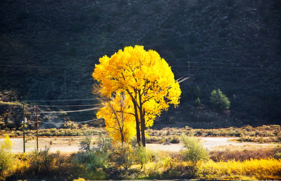 I loved crossing Colorado...brilliant colored trees, snow capped mountains and picture perfect landscapes.  When I saw this tree approaching I knew that the show of yellow would be awesome against the grey/blue/green backdrop. I only had time to grab about three images before we zipped by this tree.