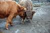 Rocking Horse Ranch Nov 2009 (65)EDIT