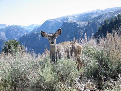 Black Canyon of the Gunnison National Park, Colorado, October 23, 2004