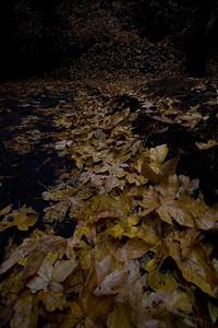 leaves_8937