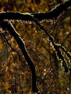 moss backlit_0073
