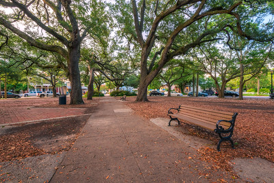 A Park Bench in Seville Square Park in Pensacola