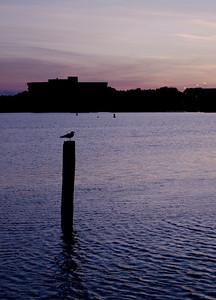 Seagull On Pensacola Bay