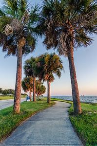 Palm Tree Path
