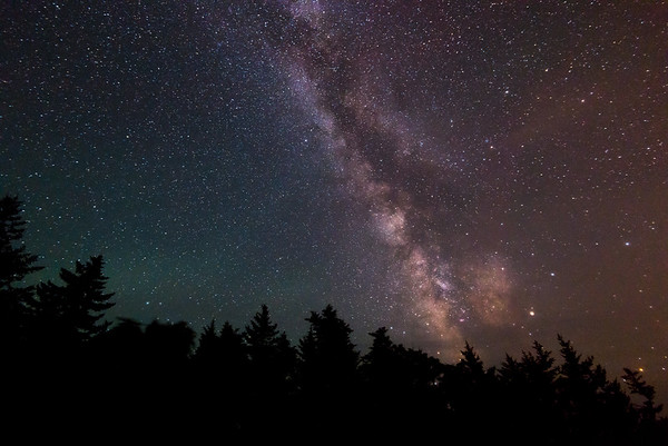 The Milky Way Over Trees in Acadia National Park
