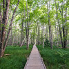 Summertime Green on Jesup Path