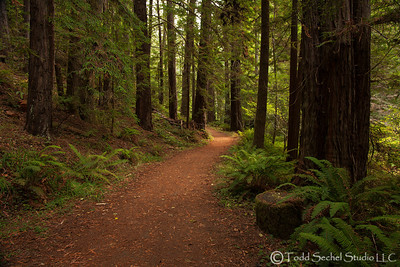 Van Damme State Park - Little River, California Oct132012_4364