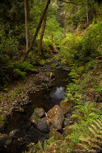 Van Damme State Park - Little River, California Oct132012_4308