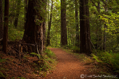Van Damme State Park - Little River, California Oct132012_4370
