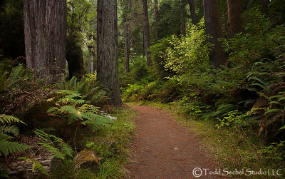 Van Damme State Park - Little River, California Oct132012_4361