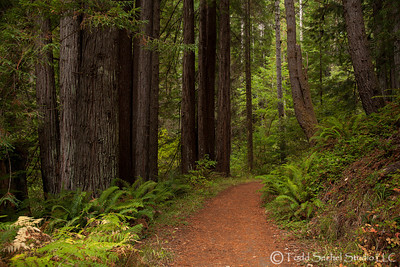 Van Damme State Park - Little River, California Oct132012_4395
