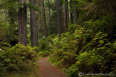 Van Damme State Park - Little River, California Oct132012_4356