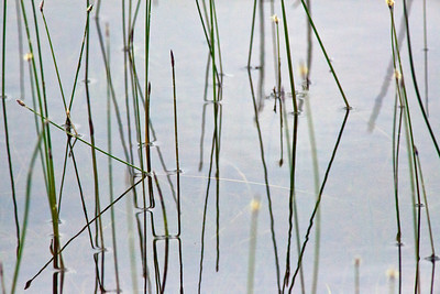 Mulliens Saganga Lake_1320