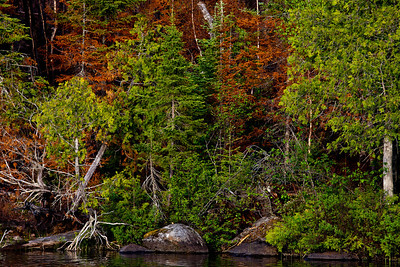 Poplar Lake_1248