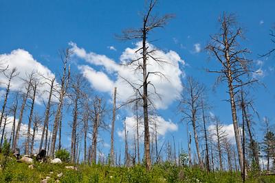 Hamm Lake Fire Aftermath_1546