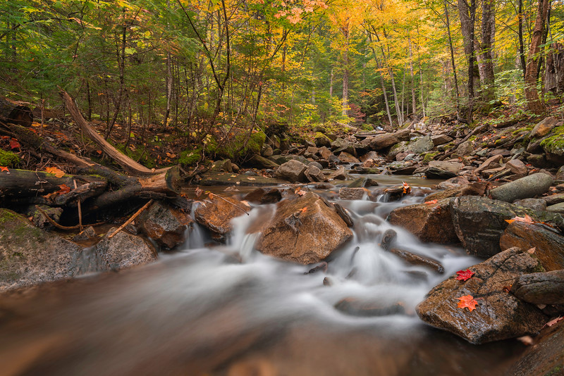 Dixville Creek In Autumn