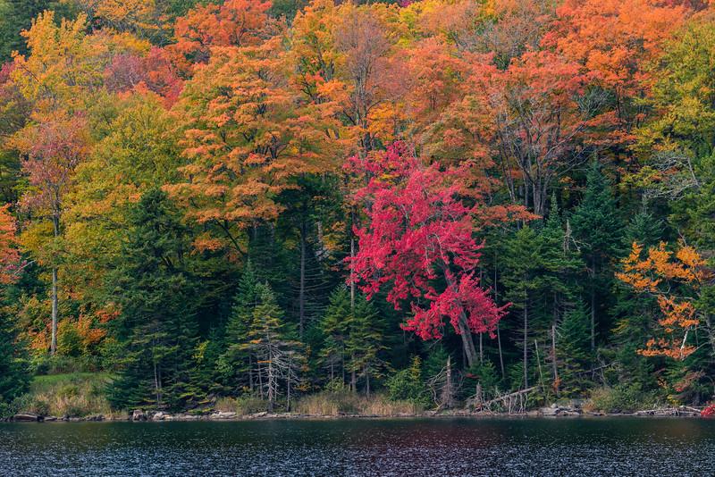 Vibrant Autumn Color In Dixville Notch