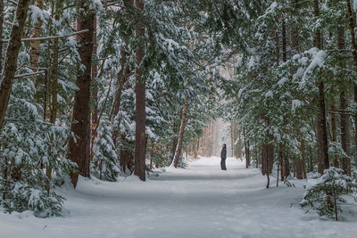 Fresh Snow On A Wooded Path In The White Mountains