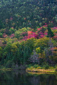 Color Begins In The White Mountains