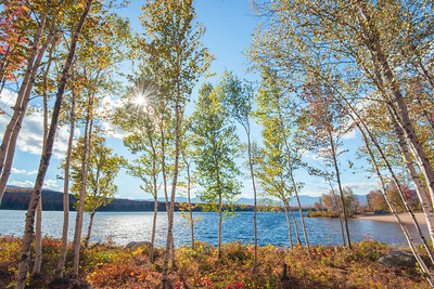 Autumn Birch Trees at Jericho Lake State Park