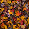 Wet Autumn Leaves Fallen On The Ground