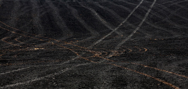 burnt field_0721