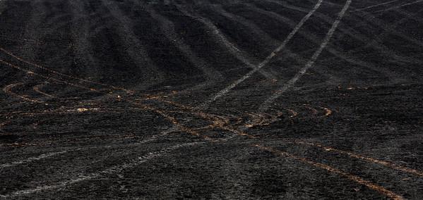 burnt field_0721
