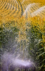 water on the grain_1056