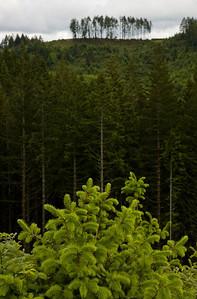 clearcut to treefarm_6344
