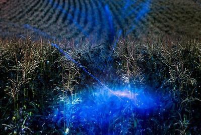 blue corn maise blast_1152