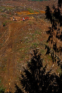 Clearcutting 47N Mist OR_7725